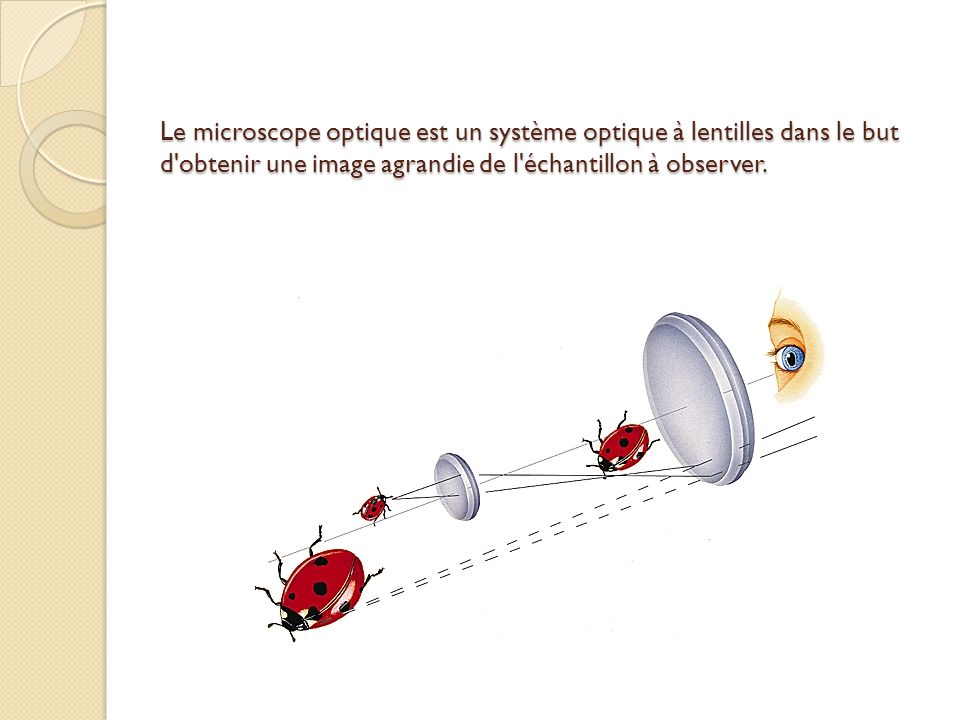 Le microscope optique est un système optique à lentilles dans le but d obtenir une image agrandie de l échantillon à observer.