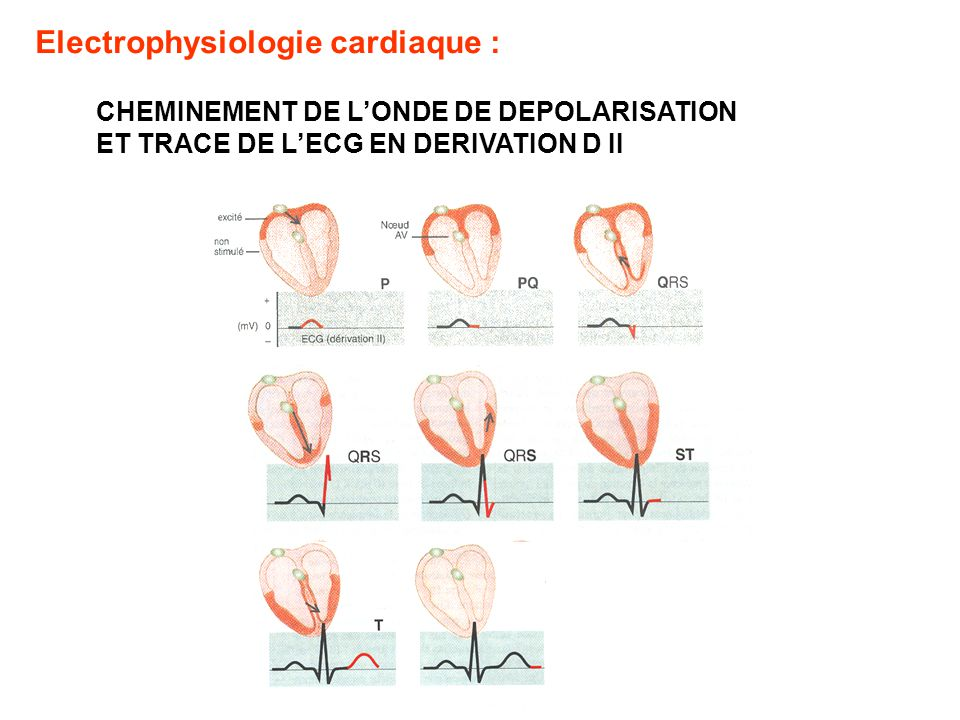 Electrophysiologie cardiaque :