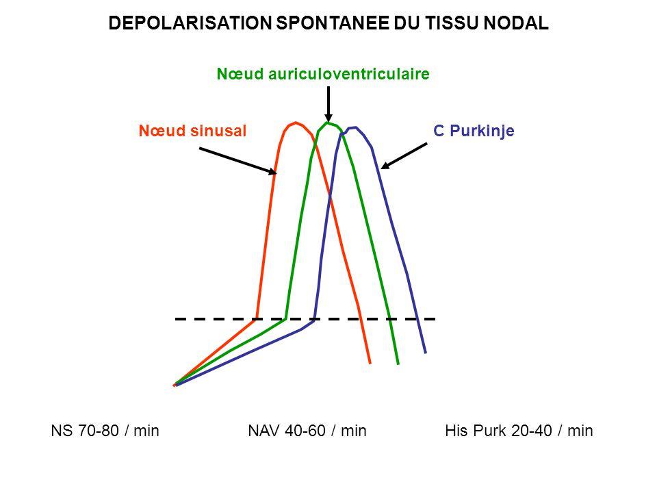 DEPOLARISATION SPONTANEE DU TISSU NODAL