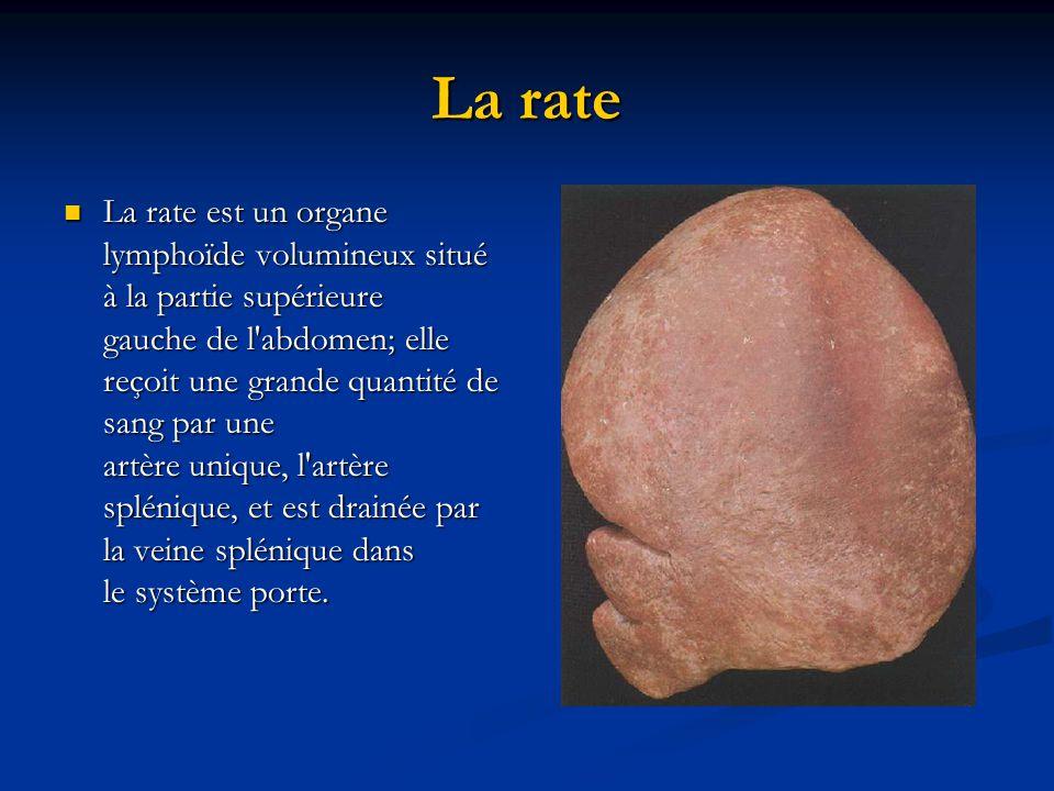 Les Organes Lympho 239 Des Secondaires Ppt T 233 L 233 Charger