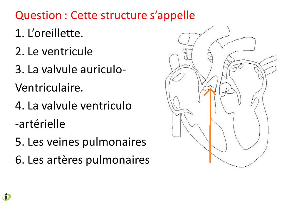 Question : Cette structure s'appelle 1. L'oreillette. 2