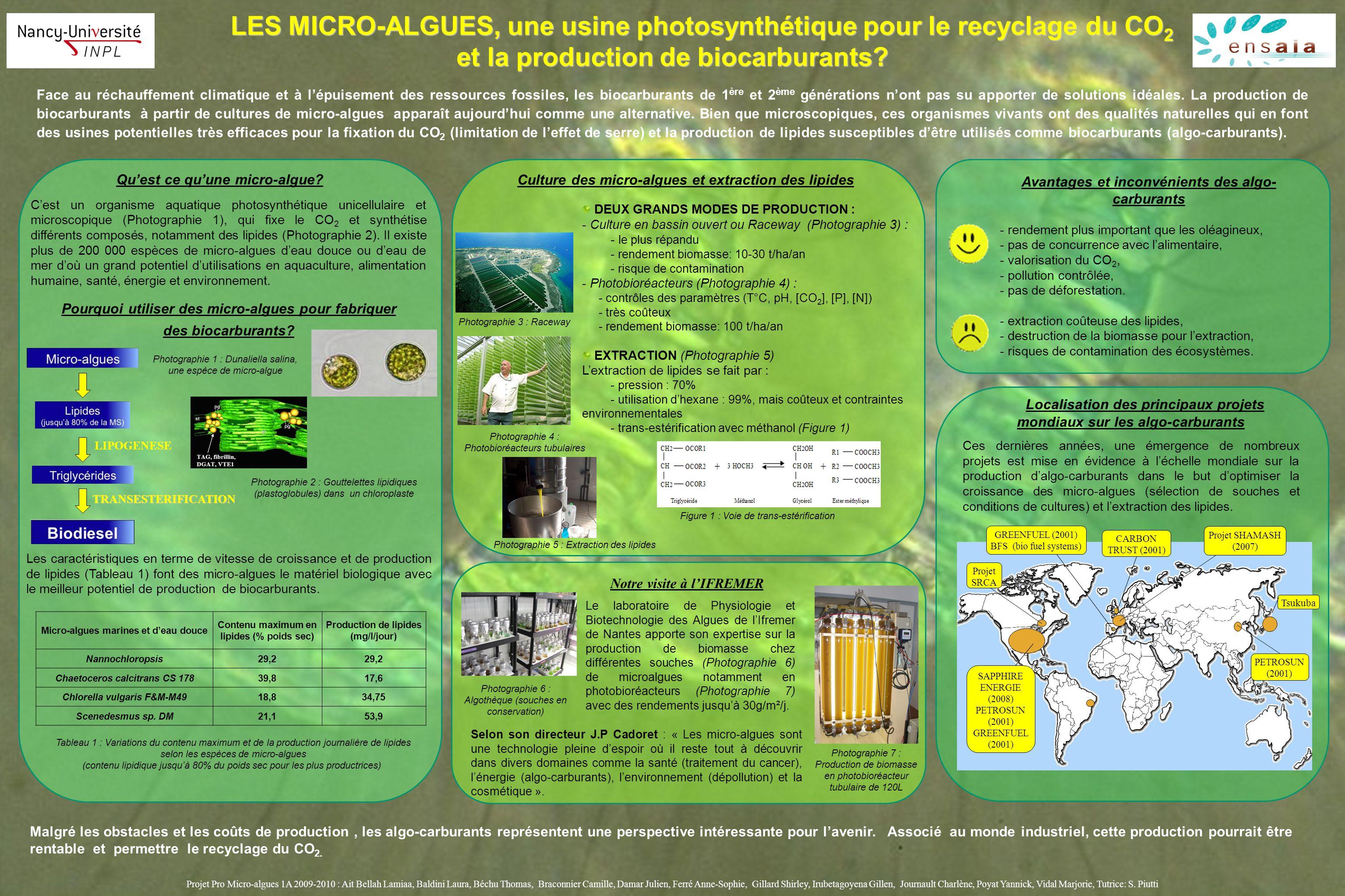 Les Micro Algues Une Usine Photosynth 233 Tique Pour Le