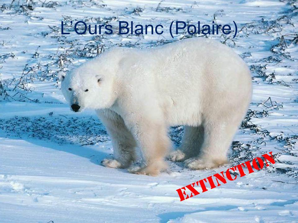 Bien connu Voici la liste d'animaux menacés d'extinction - ppt télécharger KM34