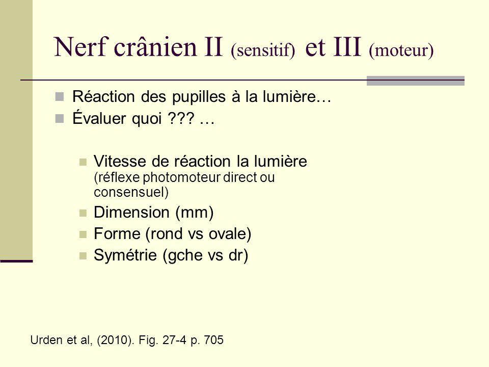 Nerf crânien II (sensitif) et III (moteur)