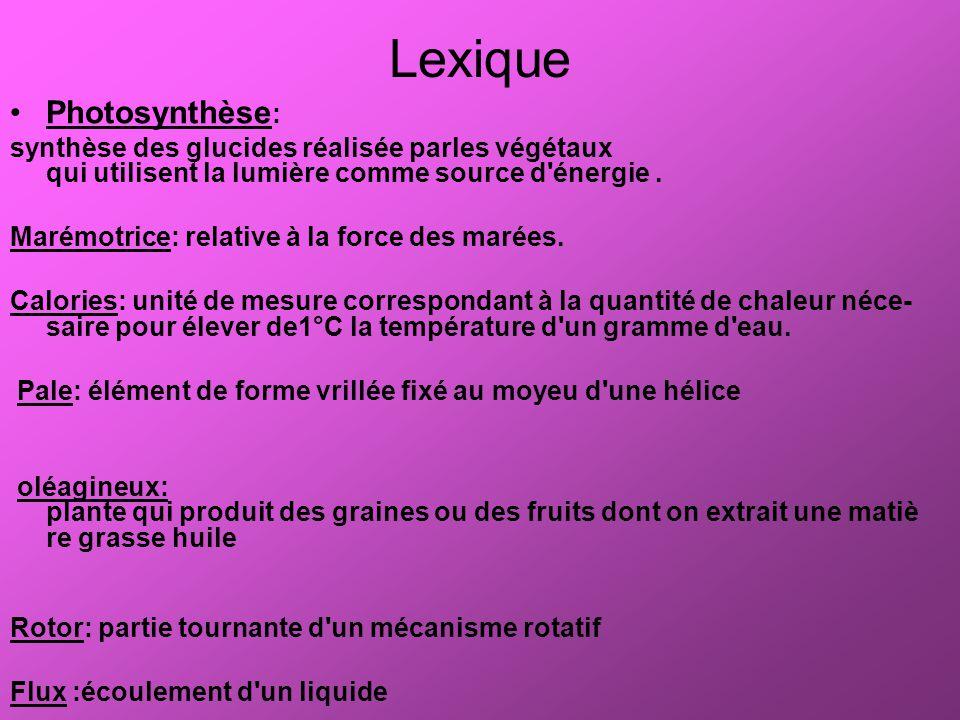 Lexique Photosynthèse: