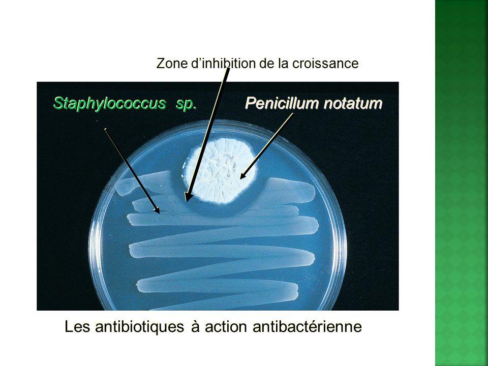 Les antibiotiques à action antibactérienne