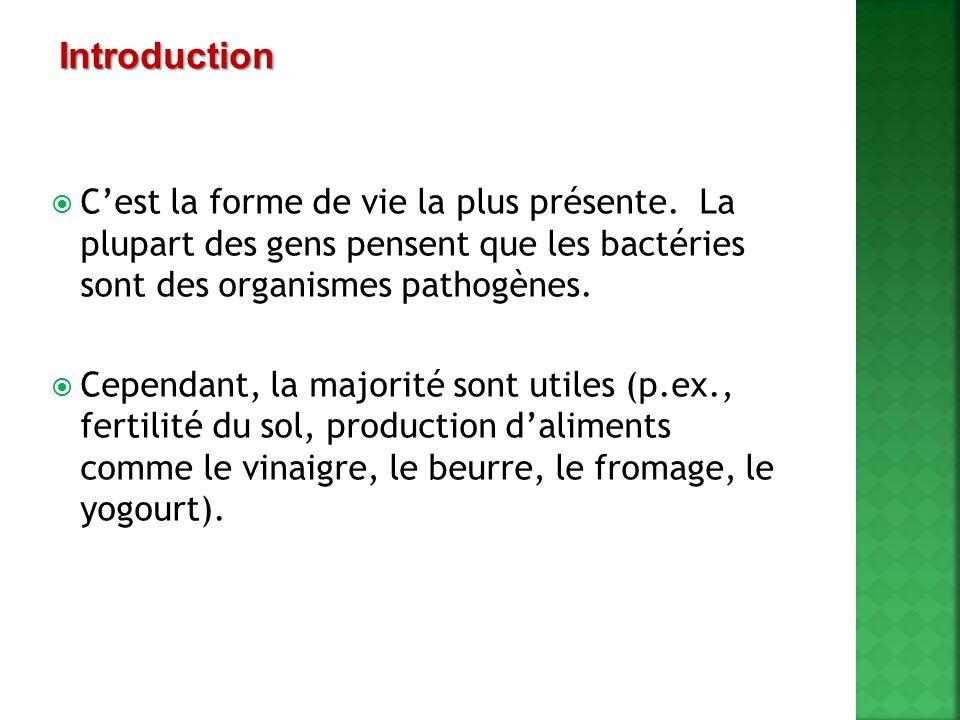 Introduction C'est la forme de vie la plus présente. La plupart des gens pensent que les bactéries sont des organismes pathogènes.
