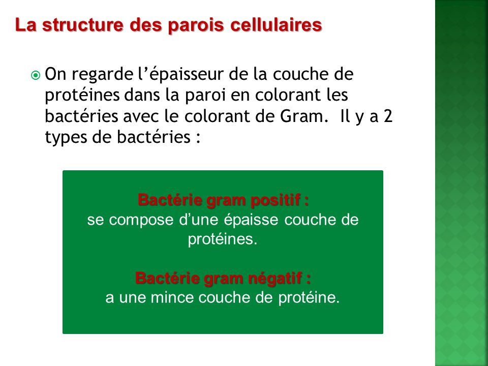 Bactérie gram positif : Bactérie gram négatif :