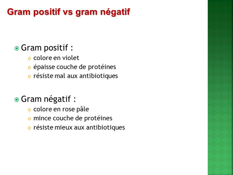 Gram positif vs gram négatif