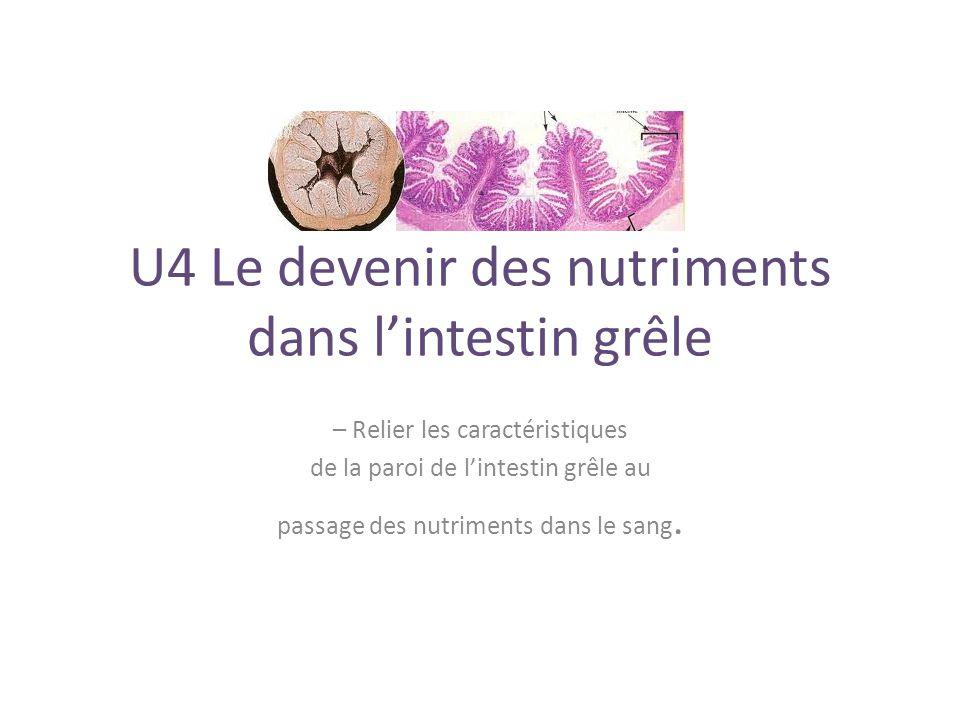 U4 Le devenir des nutriments dans l'intestin grêle