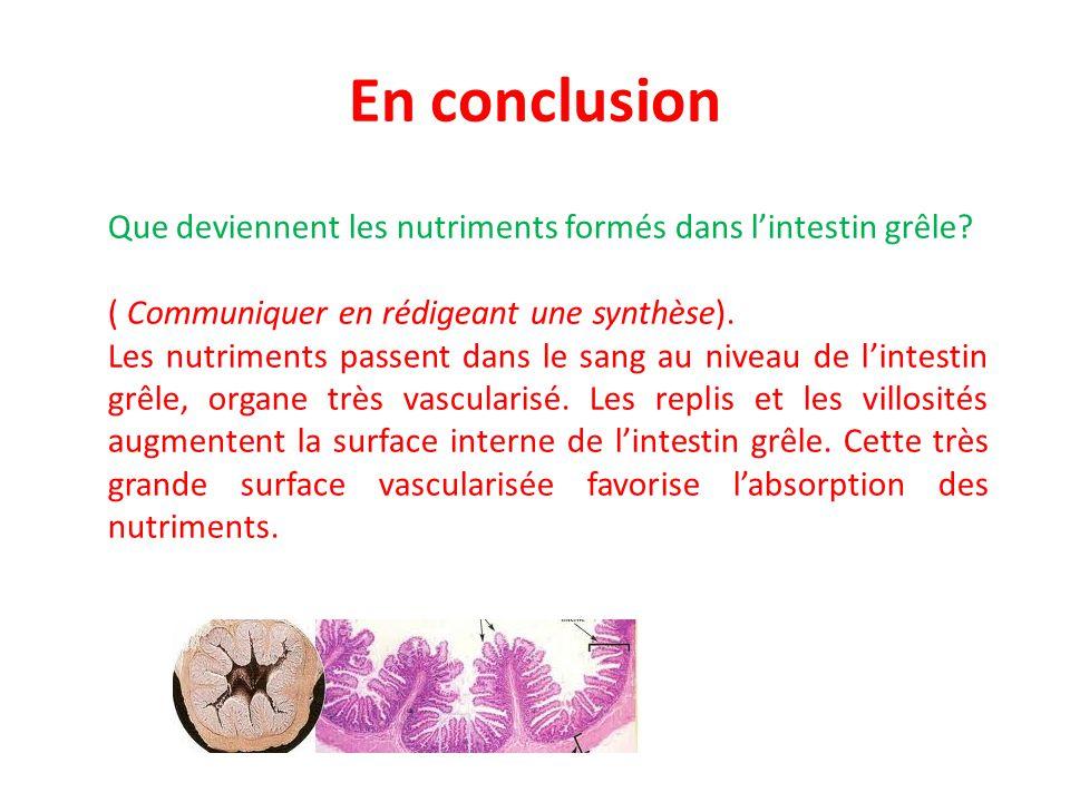 En conclusion Que deviennent les nutriments formés dans l'intestin grêle ( Communiquer en rédigeant une synthèse).