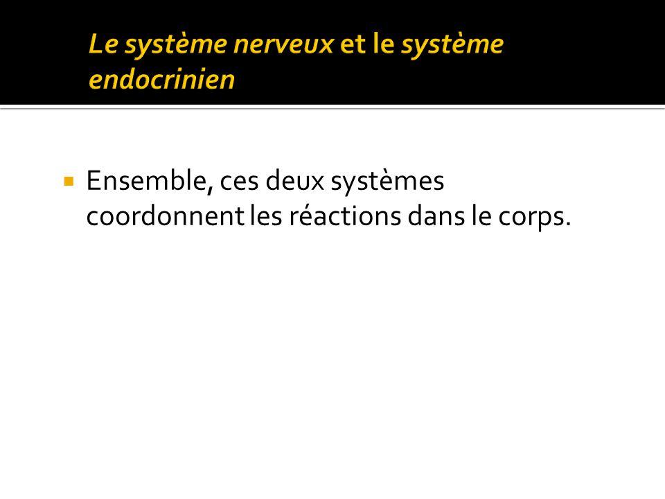 Le système nerveux et le système endocrinien