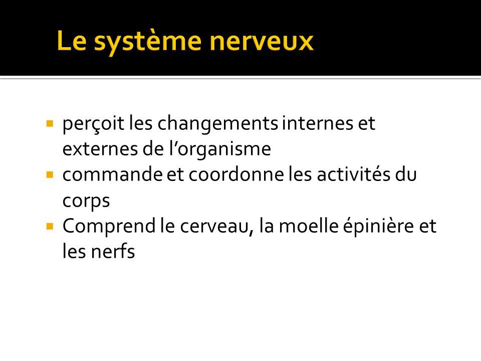 Amanda Tiessen 2011 Le système nerveux. perçoit les changements internes et externes de l'organisme.