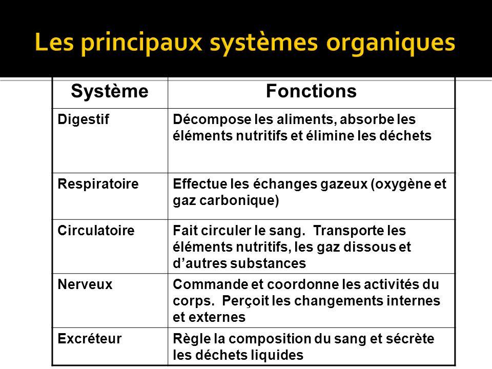 Les principaux systèmes organiques
