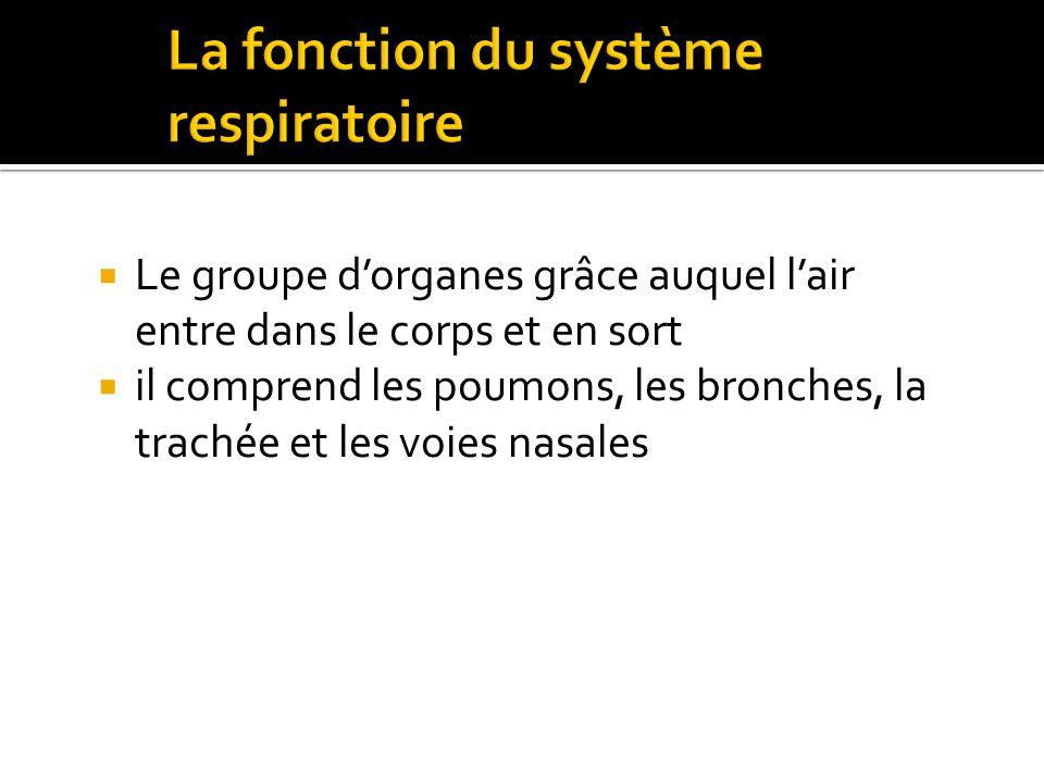 La fonction du système respiratoire