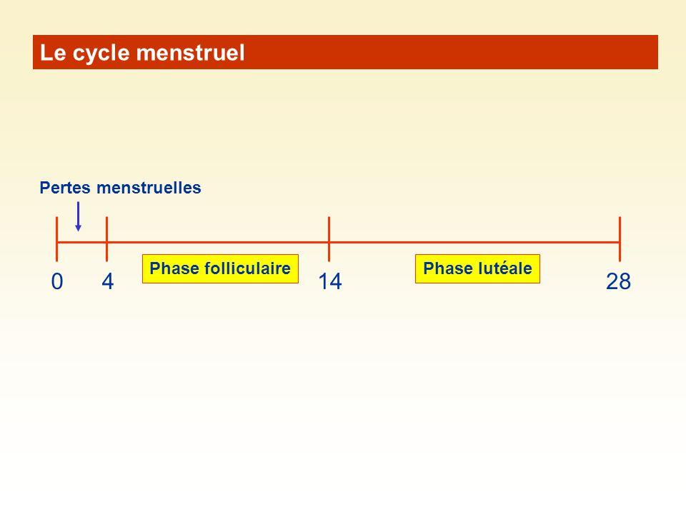 Le cycle menstruel 4 14 28 Pertes menstruelles Phase folliculaire