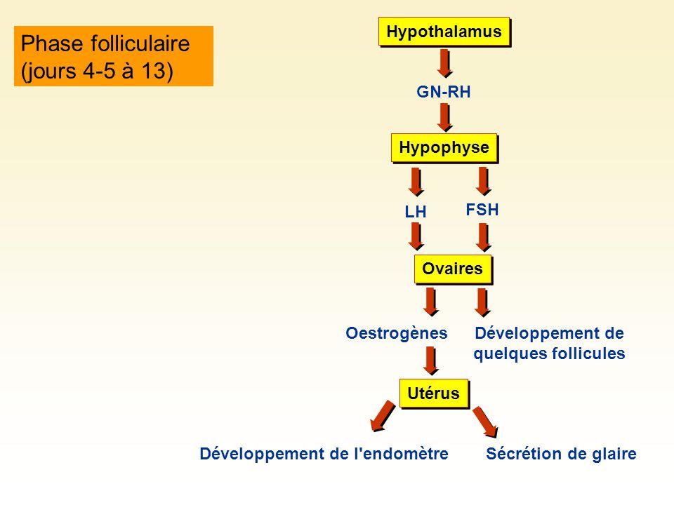 Développement de quelques follicules Développement de l endomètre