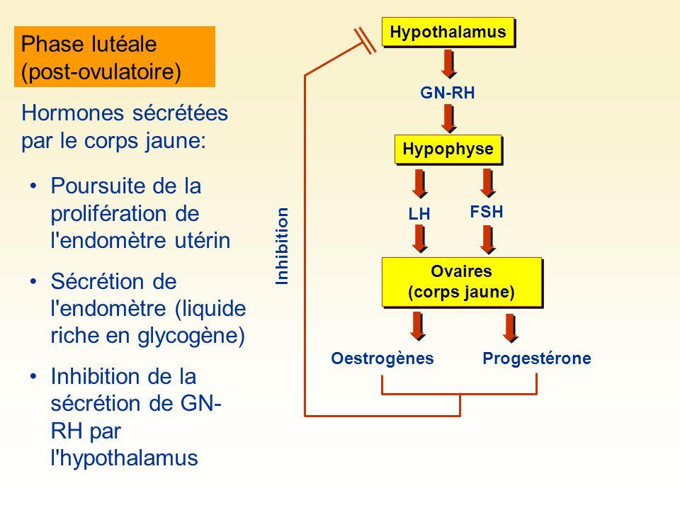 Phase lutéale (post-ovulatoire)