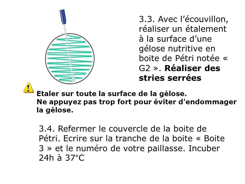 3.3. Avec l'écouvillon, réaliser un étalement à la surface d'une gélose nutritive en boite de Pétri notée « G2 ». Réaliser des stries serrées