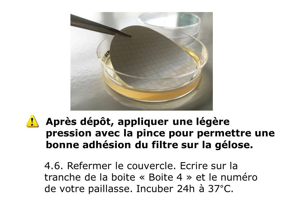 Après dépôt, appliquer une légère pression avec la pince pour permettre une bonne adhésion du filtre sur la gélose.