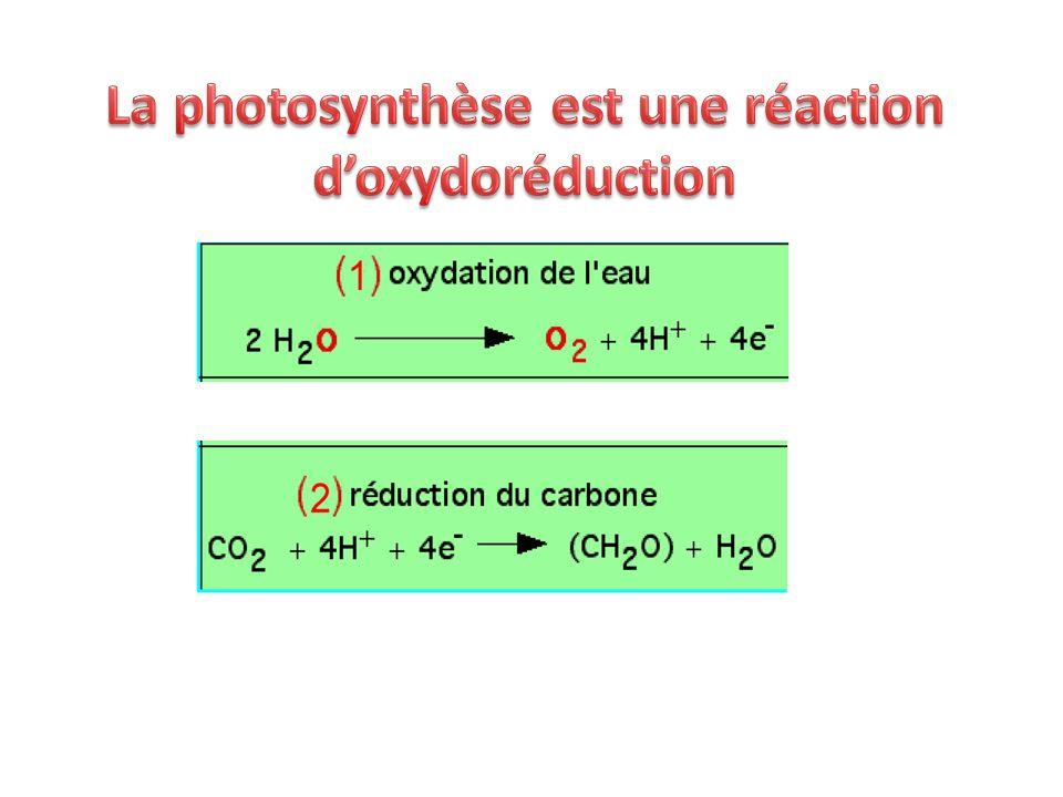 La photosynthèse est une réaction d'oxydoréduction