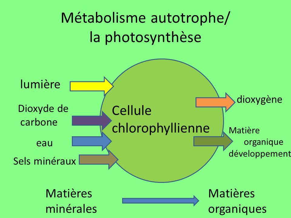 La photosynth se ppt t l charger - Dioxyde de carbone danger ...