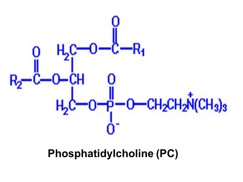Phosphatidylcholine (PC)