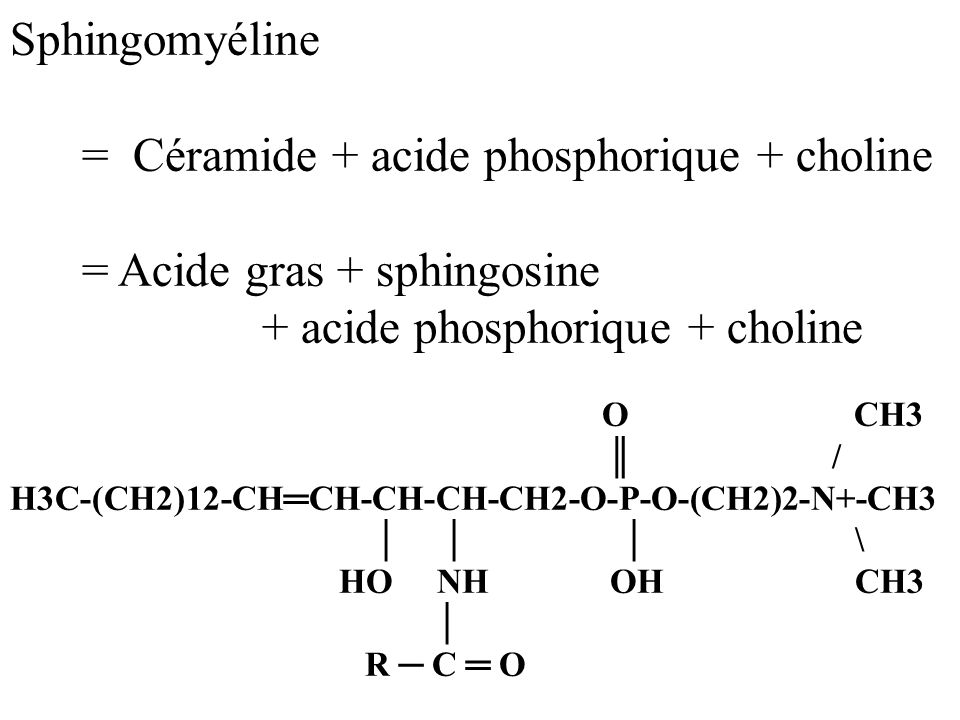 = Céramide + acide phosphorique + choline = Acide gras + sphingosine