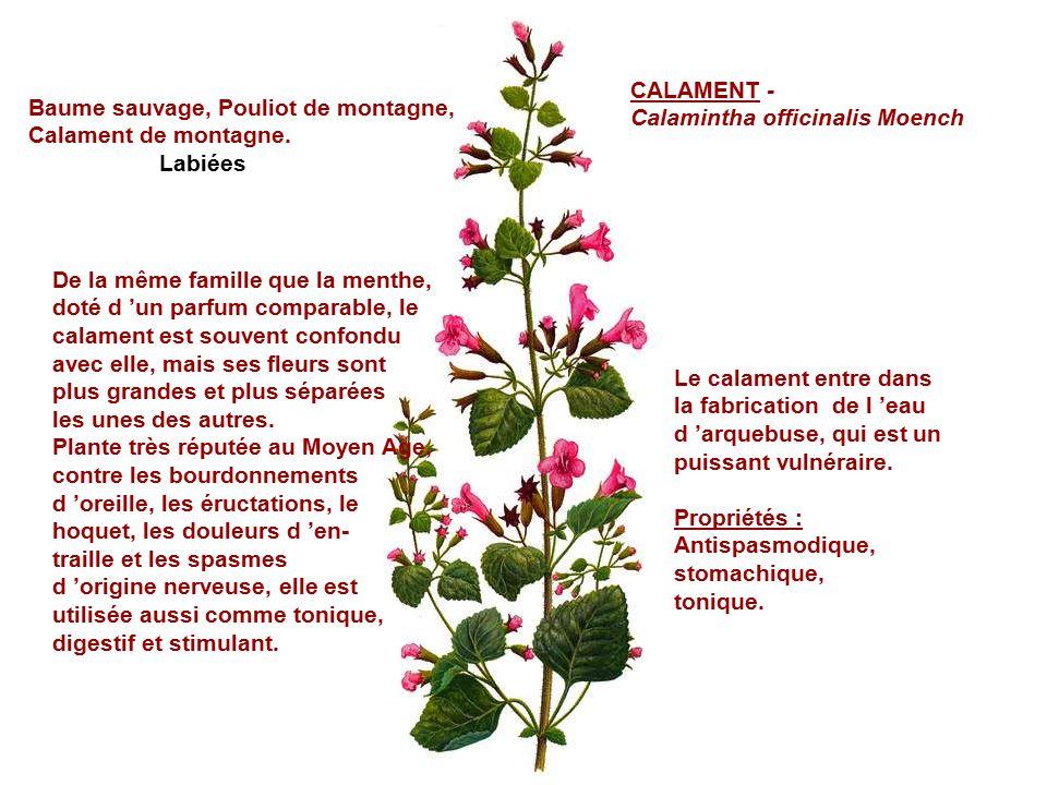 Certaines de ces plantes peuvent tre un poison voire un poison tr s violent je les - Mot de la meme famille que fleur ...