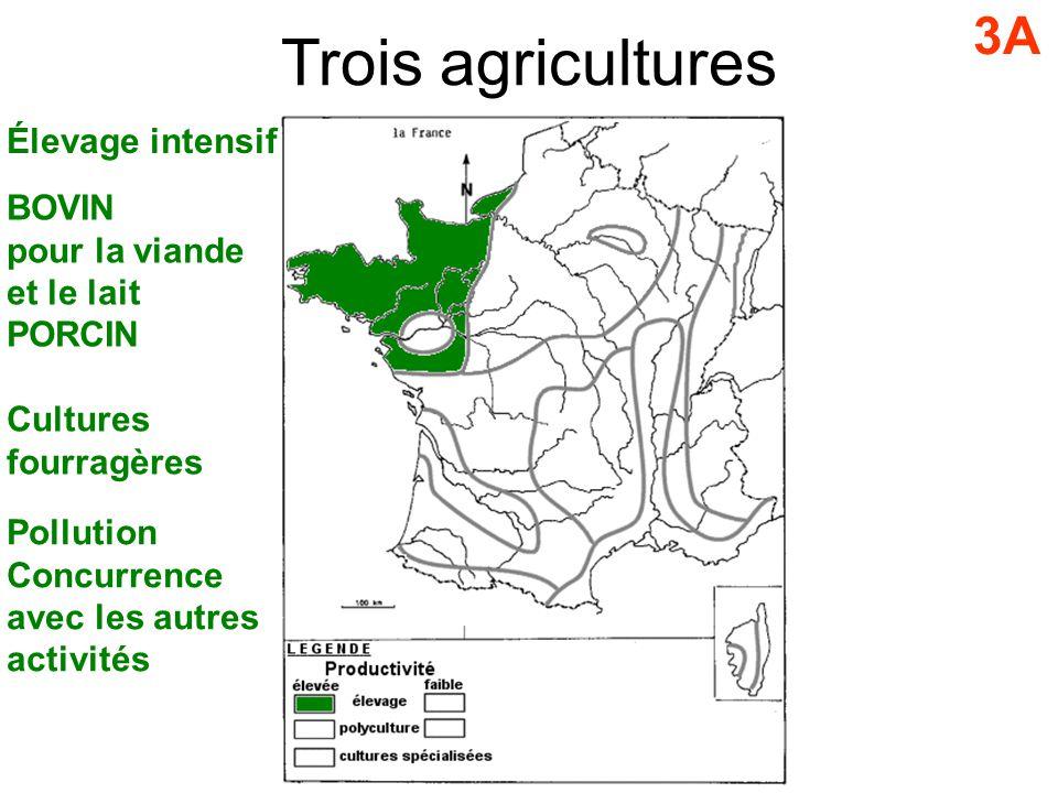 Trois agricultures 3A Élevage intensif BOVIN pour la viande et le lait