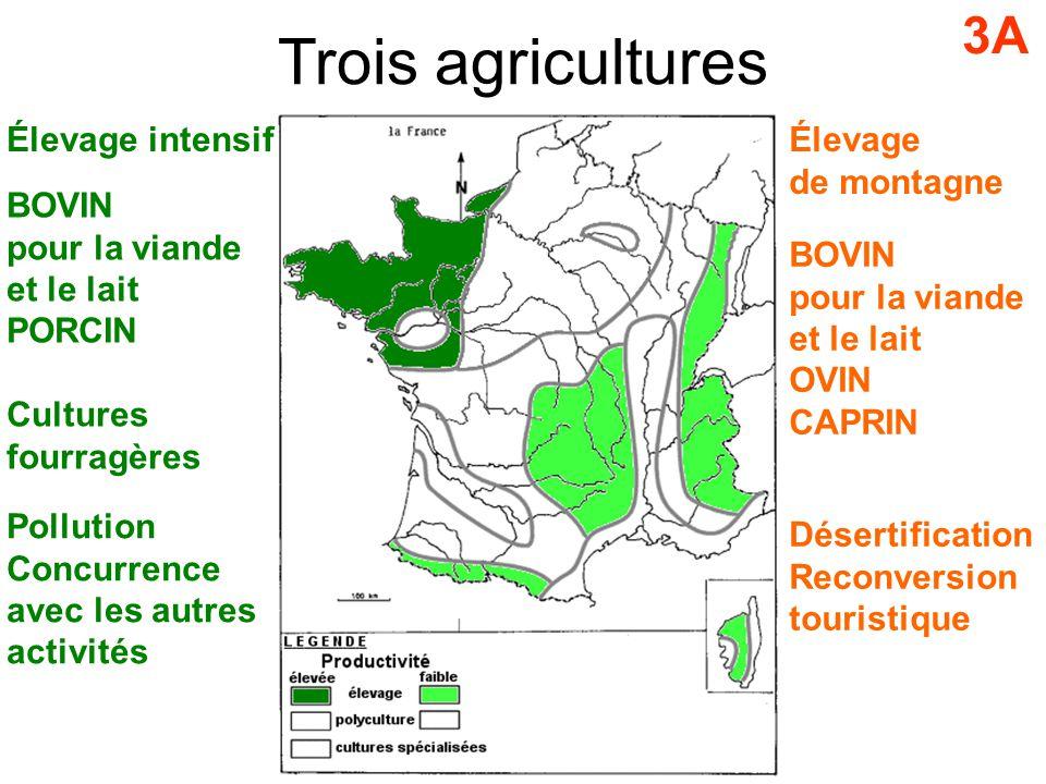 Trois agricultures 3A Élevage intensif Élevage de montagne BOVIN