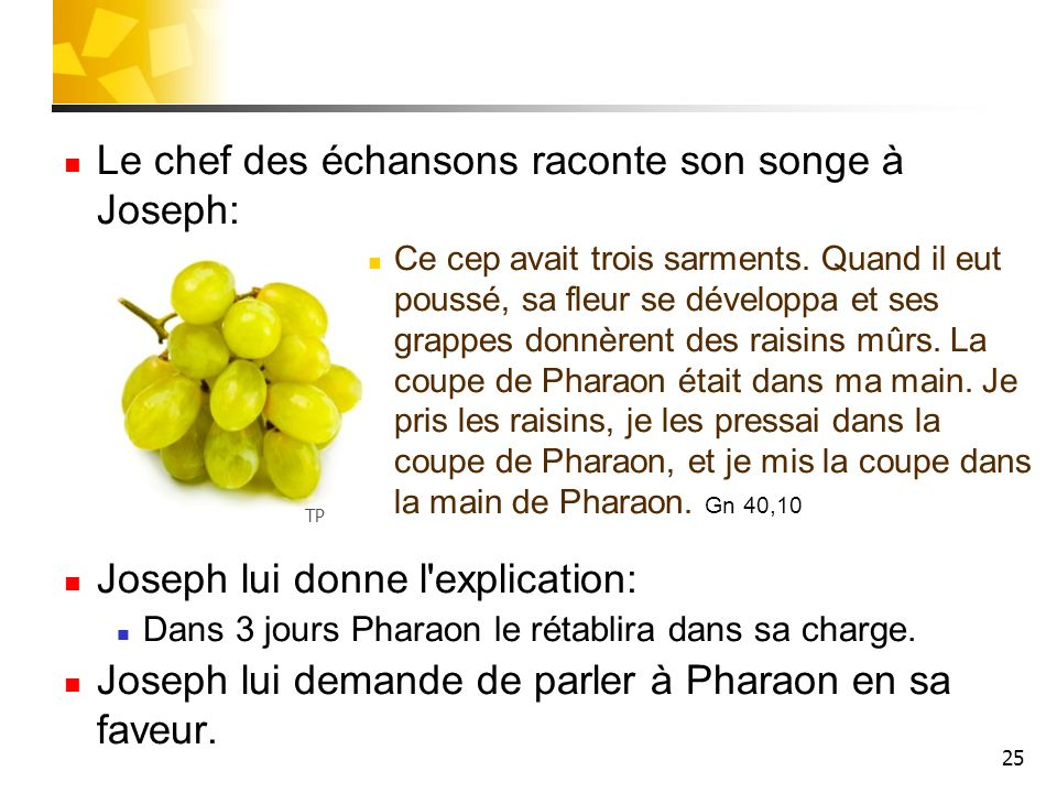 La vie de joseph panorama de la bible ppt t l charger - Quand couper les fleurs fanees des hortensias ...