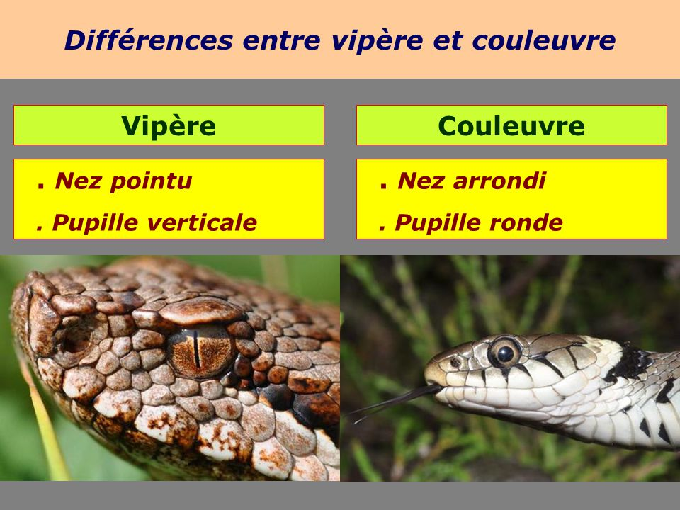 Les reptiles 5kna productions ppt video online t l charger - Difference entre pyrolyse et catalyse ...