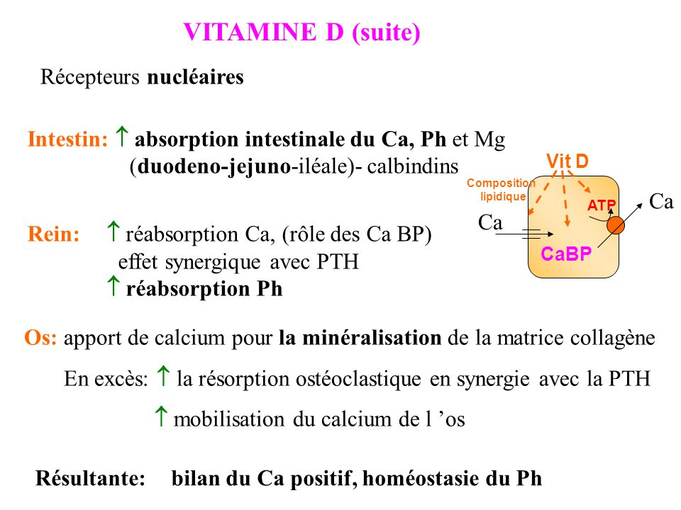 hormones du m tabolisme phosphocalcique pth vitamine d calcitonine ppt t l charger. Black Bedroom Furniture Sets. Home Design Ideas