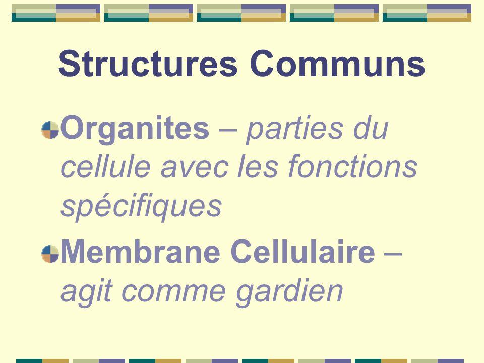 Structures Communs Organites – parties du cellule avec les fonctions spécifiques.