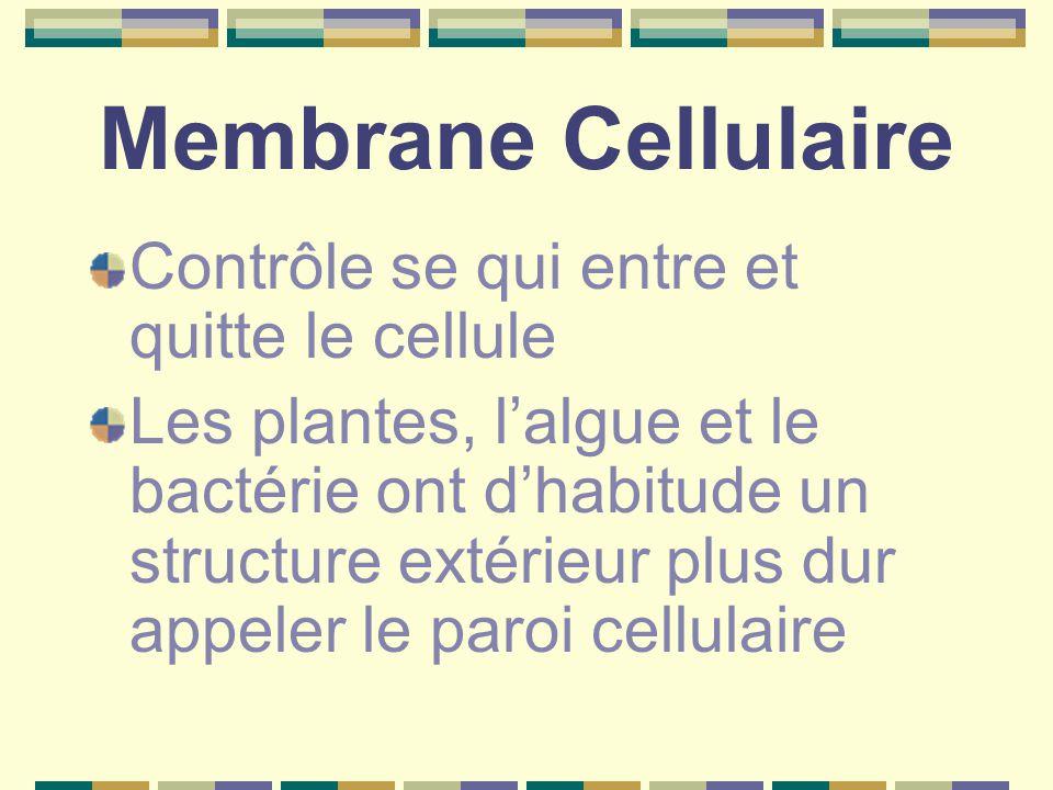 Membrane Cellulaire Contrôle se qui entre et quitte le cellule
