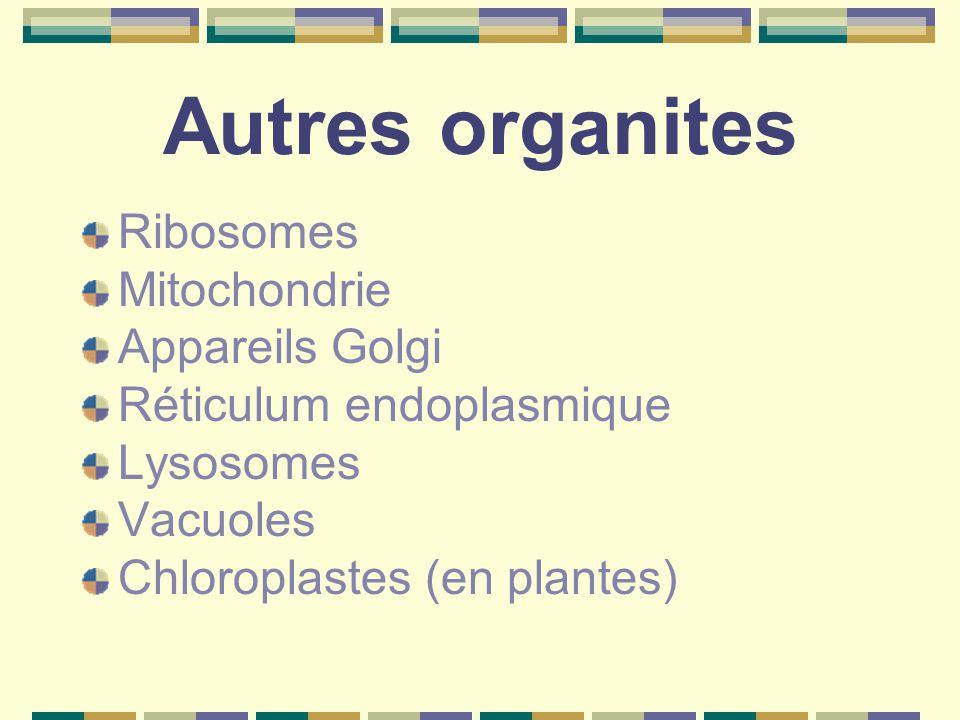 Autres organites Ribosomes Mitochondrie Appareils Golgi