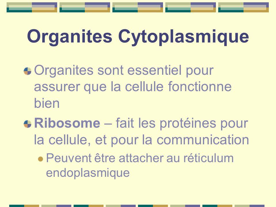 Organites Cytoplasmique