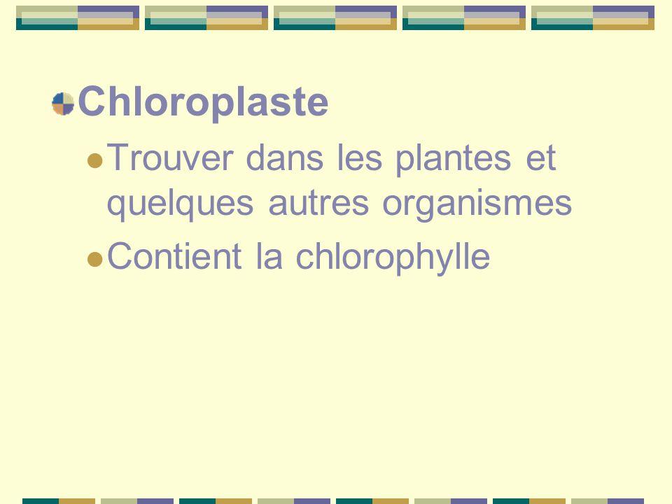 Chloroplaste Trouver dans les plantes et quelques autres organismes