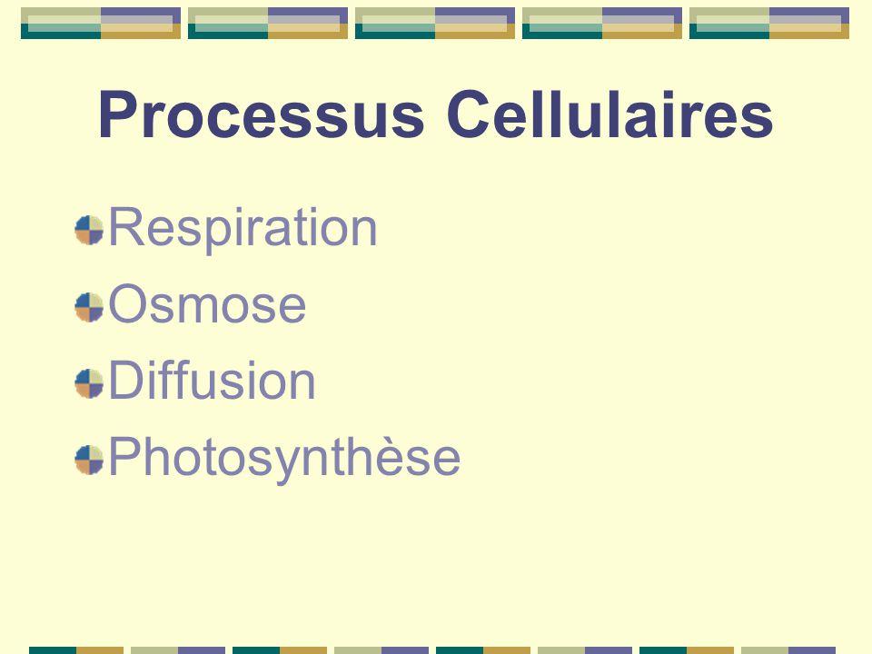 Processus Cellulaires