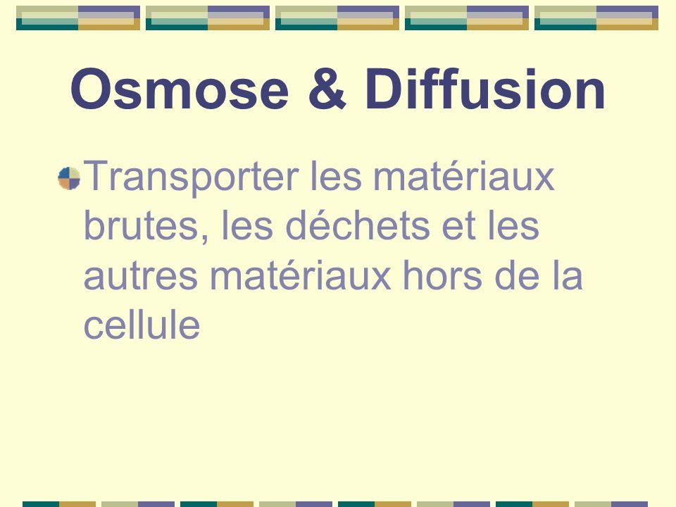 Osmose & Diffusion Transporter les matériaux brutes, les déchets et les autres matériaux hors de la cellule.