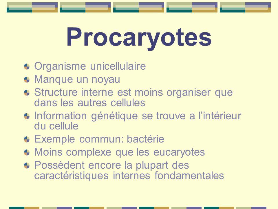 Procaryotes Organisme unicellulaire Manque un noyau