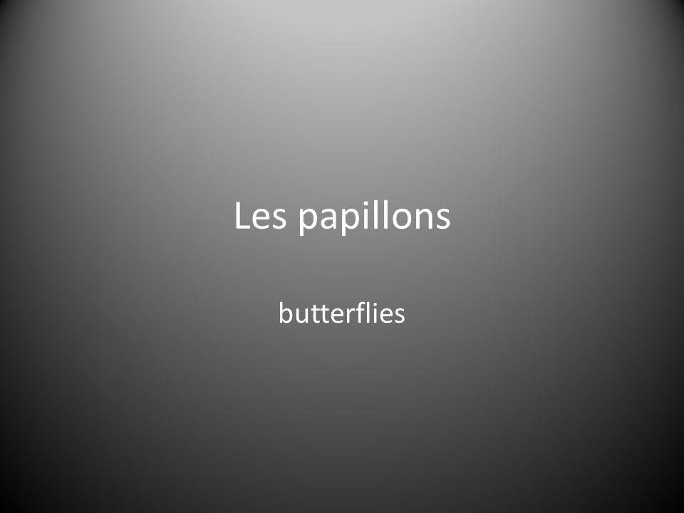 Les papillons butterflies