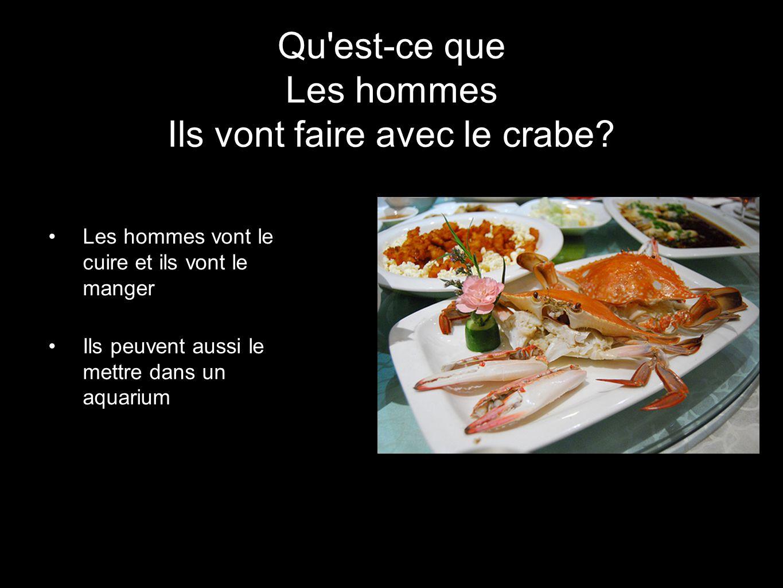 Le g ant crabe araign e ppt video online t l charger for Ce que mange les poules