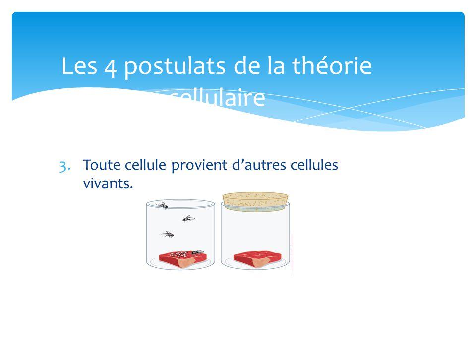 Les 4 postulats de la théorie cellulaire
