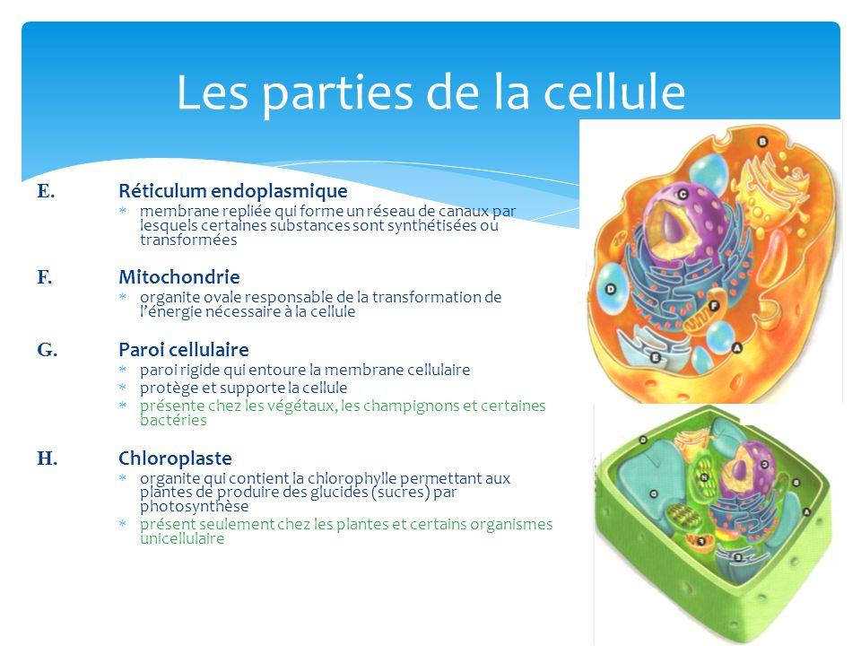 Les parties de la cellule