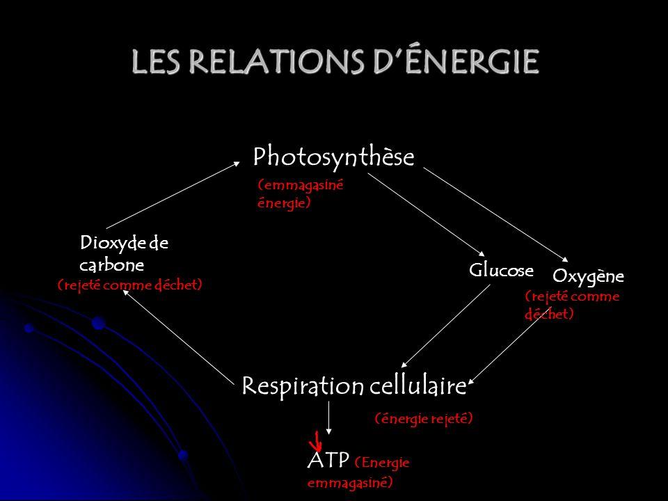 LES RELATIONS D'ÉNERGIE