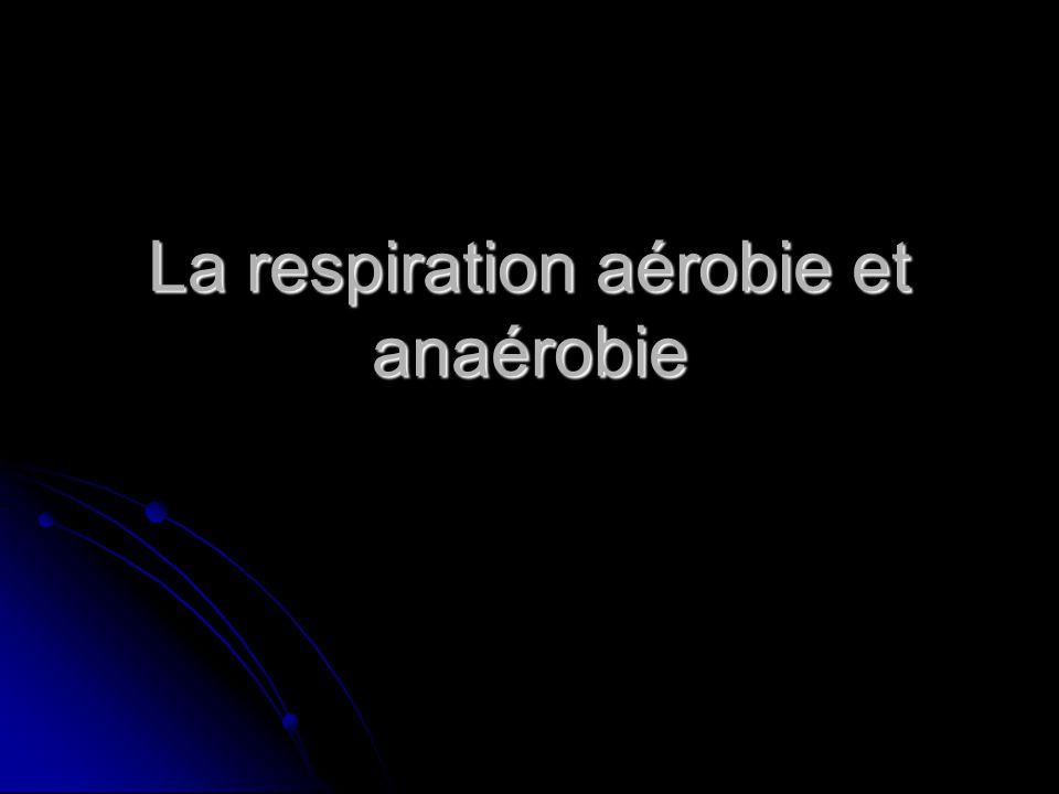 La respiration aérobie et anaérobie
