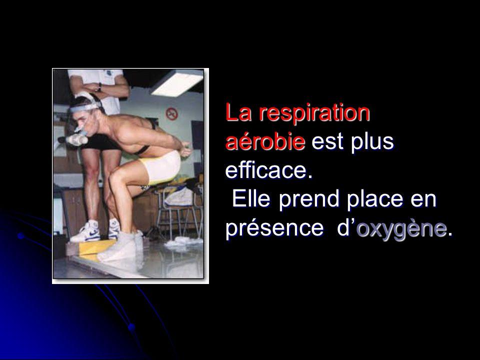 La respiration aérobie est plus efficace.