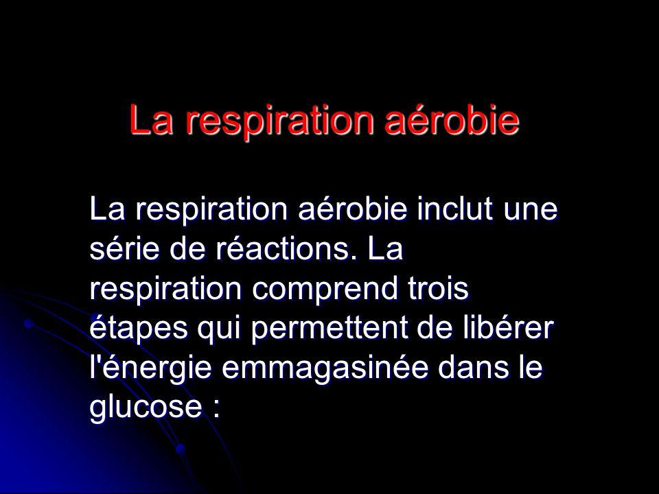 La respiration aérobie
